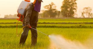 Health Effects of Pesticides on Humans