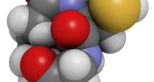 What Are Antioxdants And What Do They Do